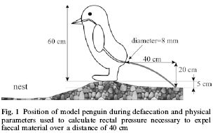 penguinfigure